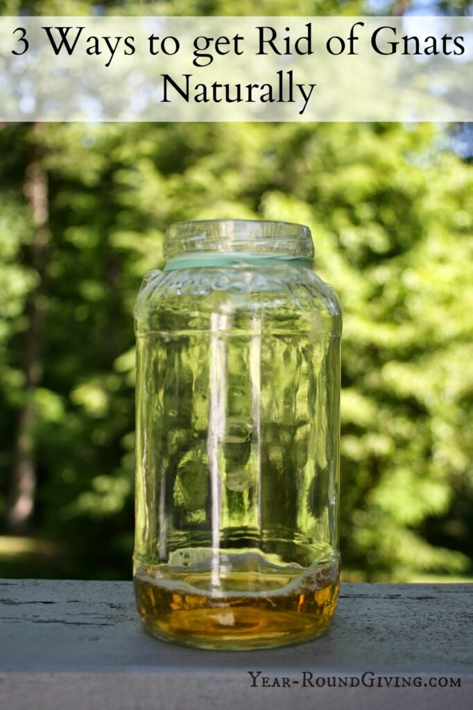 how to get rid of gnats naturally