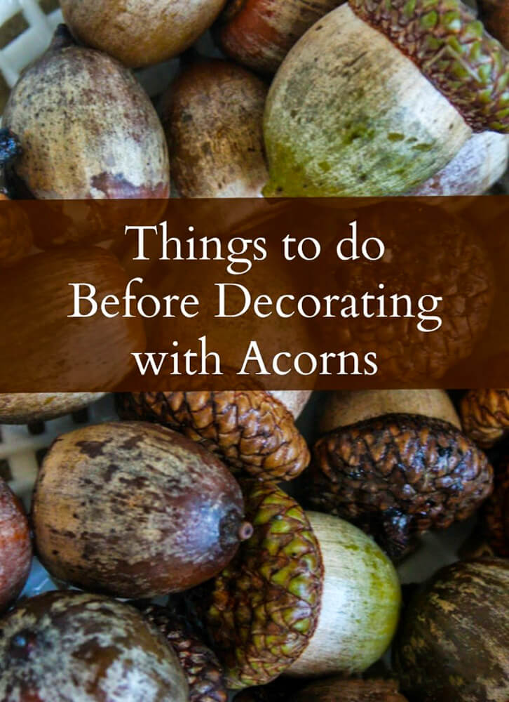How to Prep Acorns before decorating with them.