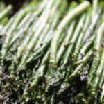 Garlic Sauteed Asparagus 1